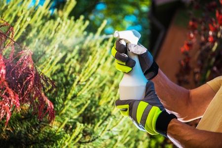Insecticide Garden Plants Using Handheld Sprayer. Closeup Photo. Gardening Theme.