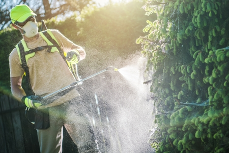 Pesticide Garden Plants Spraying with Professional Equipment by Caucasian Gardener in His 30s