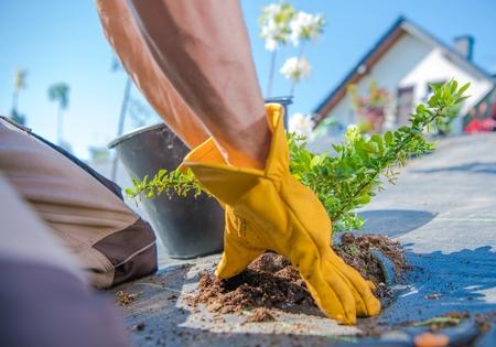 Men Planting Small Plants. Building Newly Designed Garden Theme. Reklamní fotografie