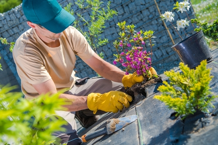 Caucasian Gardener Planting Flowers in the New Designed Backyard Garden. Landscaping Industry.