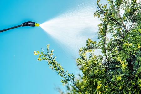 Spraying Insecticide on the Garden Tree. Closeup Photo. Saving Plants Theme.