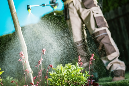 Gardener Fighting Insects in the Garden by Insecticide Whole Backyard Garden.