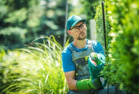 Caucasian Gardener Trimming Wall of Thujas. Shaping Plants Theme. Garden Work. Archivio Fotografico