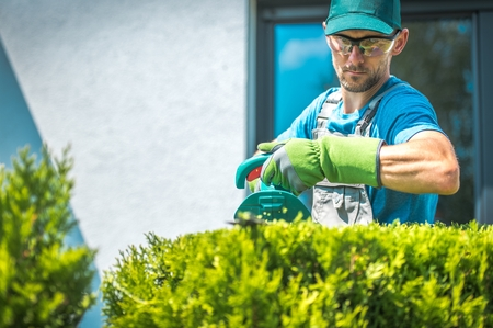 Professional Caucasian Gardener in His 30s Trimming Shrub Using Electric Trimmer. Stock Photo