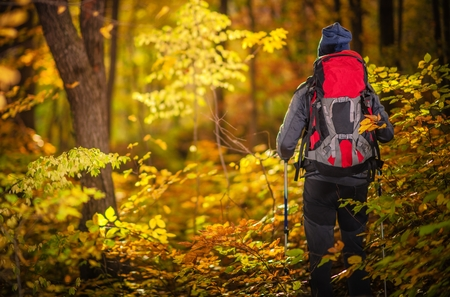Autumn Foliage Exploring. Caucasian Hiker on the Forest Trail. Backpacking in the Wood.