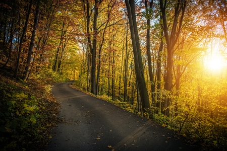 Fall Foliage Scenic Forest Route. Winding Road and the Autumn Scenery. Reklamní fotografie