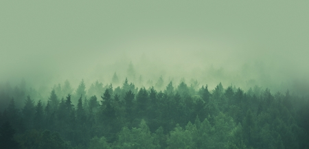 Foggy Forest Panorama. Scenic Forestry and Low Elevated Clouds.
