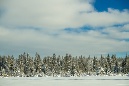 Scenic Winter Background. Snowy Landscape with Trees Line.