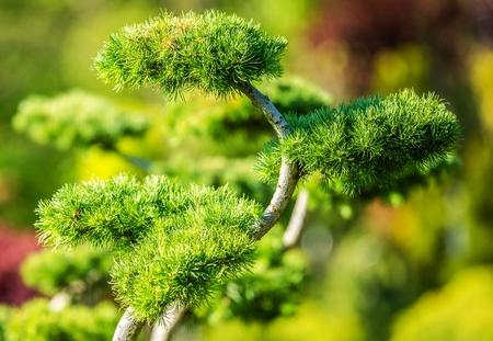 Decorative Garden Tree Closeup Photo. Landscaping Industry.