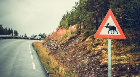 Watch For Moose Road Sign in the Norway. Wildlife Crossing. Reklamní fotografie
