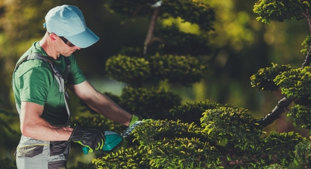 Men Shaping Garden Trees. Caucasian Gardener in His 30s with Small Electric Plants Trimmer. Topiary Theme. Stock Photo