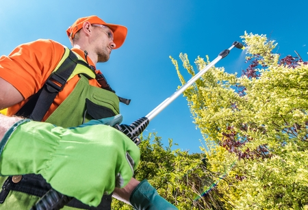 Professional Gardener in His 30s with Insecticide Garden Equipment Spraying Plants and Trees During Scheduled Spring Maintenance. Stock Photo