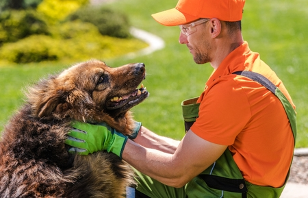 Caucasian Gardener in His 30s and His German Shepherd Dog. Having Fun Together.