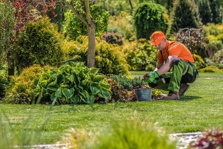 Professioneel tuinman. Kaukasische tuinman en het onderhoud van de achtertuin. Thema van de landbouwindustrie. Stockfoto