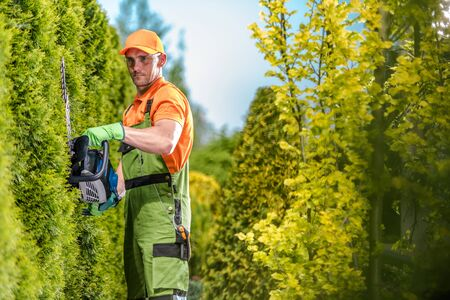 Gardener Green Wall Trimming Using Gasoline Hedge Trimmer. Professional Garden Care.