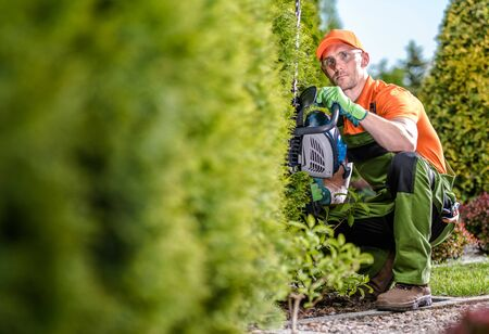 Caucasian Gardener with Gasoline Hedge Trimmer Shaping Wall of Thuja Trees. Hedge Trimmer Works.