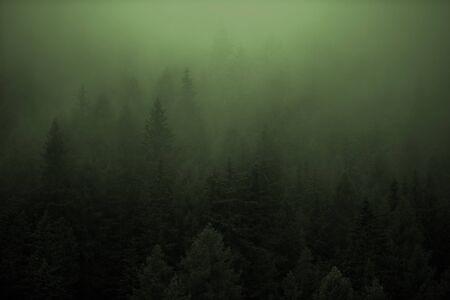 Dense Forest Foggy Weather During Rainy Evening. Nature Landscape. Imagens