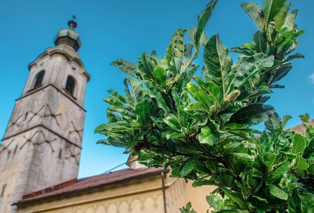 The Italian Place. Nature and Architecture. Aged Church in a Background. Urban Flora.