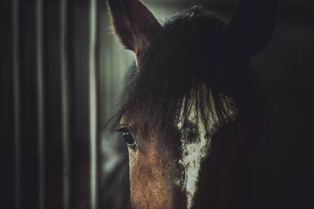 Cruelty Theme. Sad Eyes of Horse. Animal Portrait Photo.