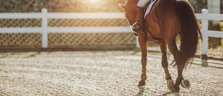 Horse Riding in Sunset. Equestrian Facility. Professional Female Rider on His Horse.