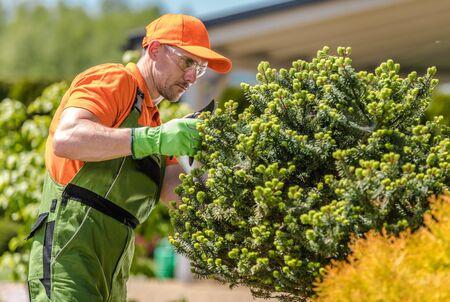 Gardener in His 30s Taking Care of Decorative Garden Trees. Landscaping Industry.