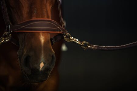 Head Closeup of Brown Race Horse in a Stable. .Equestrian Facility. Reklamní fotografie - 130051405