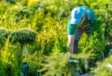 Caucasian Men Working in a Garden Store During Sunny Summer Day. Stockfoto