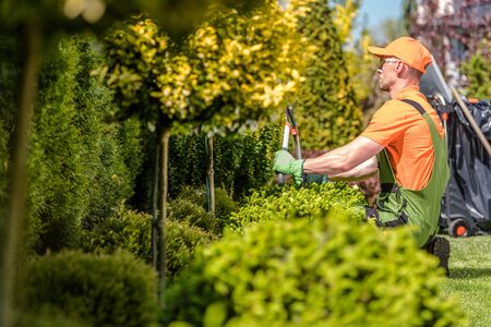Caucasian Garden Worker Trimming Trees and Plants Using Large Scissors. Stockfoto
