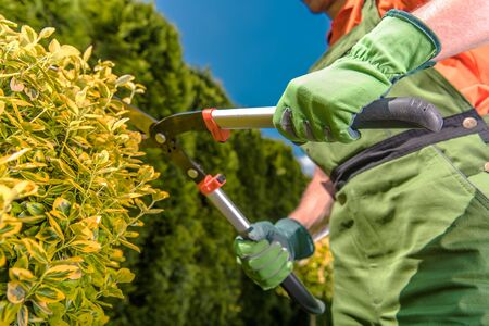 Caucasian Men with Large Garden Scissors Trimming Plants. Landscaping Industry Job. Agriculture Theme.