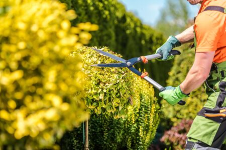 Summer Plants Maintenance. Caucasian Gardener Trimming Trees Using Large Professional Scissors. Agriculture Industry. Stockfoto