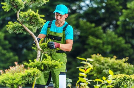 Summer Garden Works. Caucasian Gardener Trimming Decorative Trees. Industrial Theme.