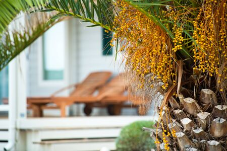 Summer Vacation Destination Concept. Tropical Palm Tree and Beach Chairs in the Background. Stok Fotoğraf