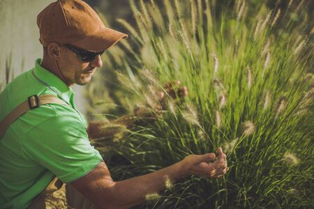 Caucasian Gardener Taking Look on His Decorative Grasses.