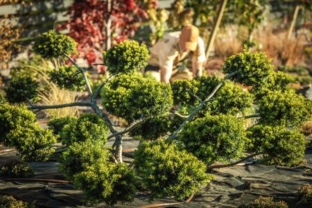 Decorative Beautiful Garden Trees and the Men Working in a Background. Stock Photo