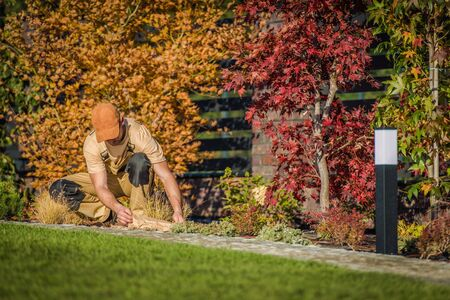 Fall Season Garden Works. Caucasian Men Planting New Flowers in the Backyard Garden. Stockfoto