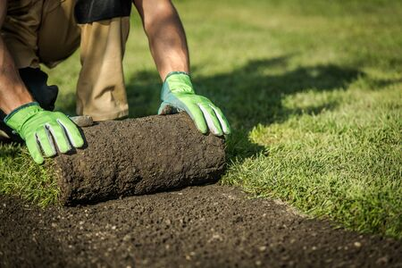 Professional Landscaper Installing New Grass Turfs From a Roll. Garden Building Theme. Landscaping Industry. Stock Photo