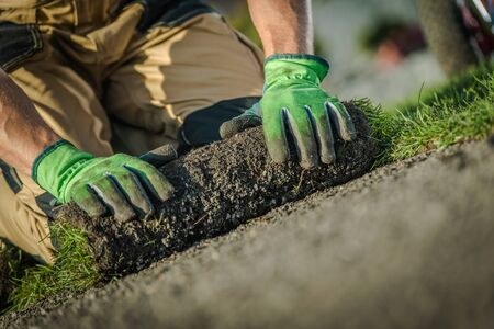 Roll of New Natural Grass Turf Installed by Professional Gardener. Landscaping Industry. Stock Photo