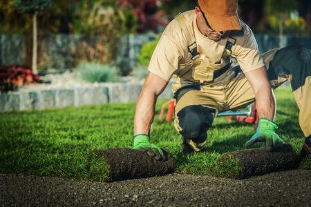 Professional Landscaper Job. Caucasian Pro Gardener Installing New Rolls of Natural Grass Turfs.
