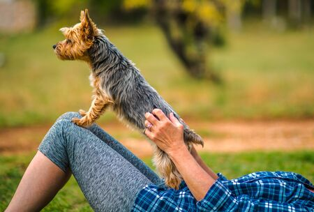 Caucasian Woman in Her 60s Playing with Her Pet. Australian Silky Terrier.