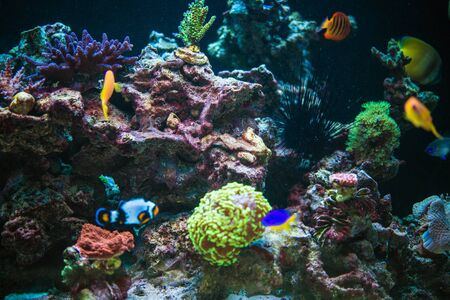 Marine Aquarium Reef and Tropical Fishes. Marine Plants and Animals in a Contained Environment.