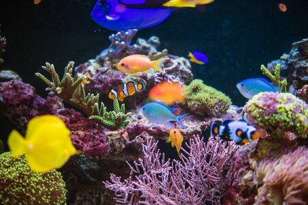 Plantas y animales marinos en un acuario marino. Peces de arrecife y tropicales. Foto de archivo