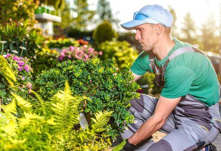 Caucasian Male Gardener Tends To Residential Backyard Landscape By Maintaining Garden Design.