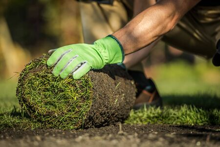 Caucasian Gardener Installing Natural Grass Turfs in Garden. Close Up Photo. Natural Grass is the Best Thing to Install to Maintain the Ecosystem of Your Home. Landscaping Industry Photo. 스톡 콘텐츠