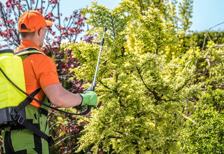 Garden and Agriculture Theme. Professional Gardener Worker Insecticide Plants.  Stock Photo