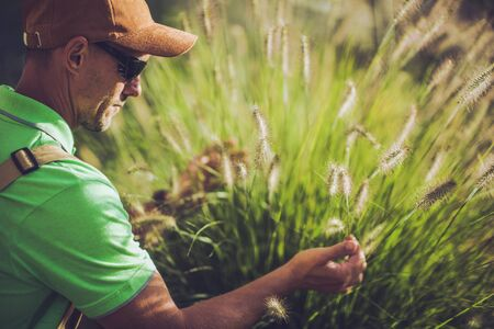 Landscape Professional Looking At Decorative Garden Grasses In Newly Designed Residential Backyard. Stock fotó