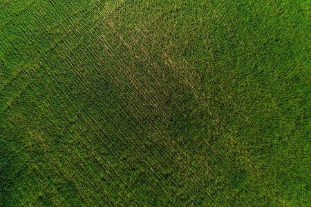Aerial View Of Vast Field Of Green Crops Growing On Rural Farmland.