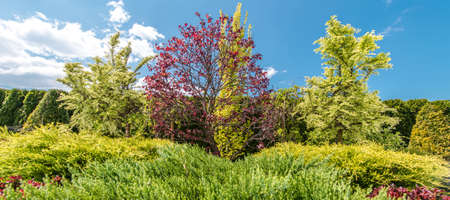 Summer Day Backyard Garden Trees and Plants in Panoramic Photo. Gardening and Landscaping Industry.