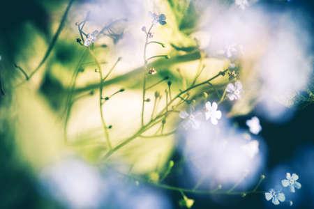 Floral Bokehs Conceptual Nature Background. Soft Flower Blurs