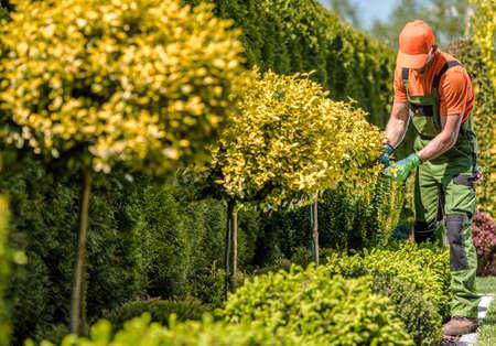 Caucasian Professional Gardener Trimming Plants