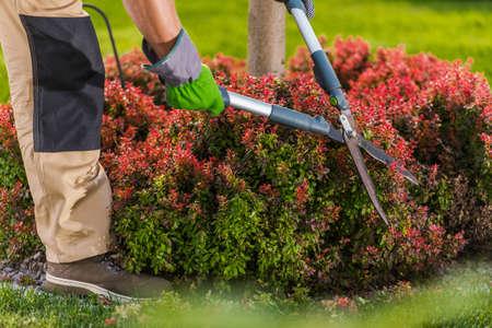 Garden Shrub Trimming by Caucasian Gardener in His 30s Close Up Photo. Standard-Bild